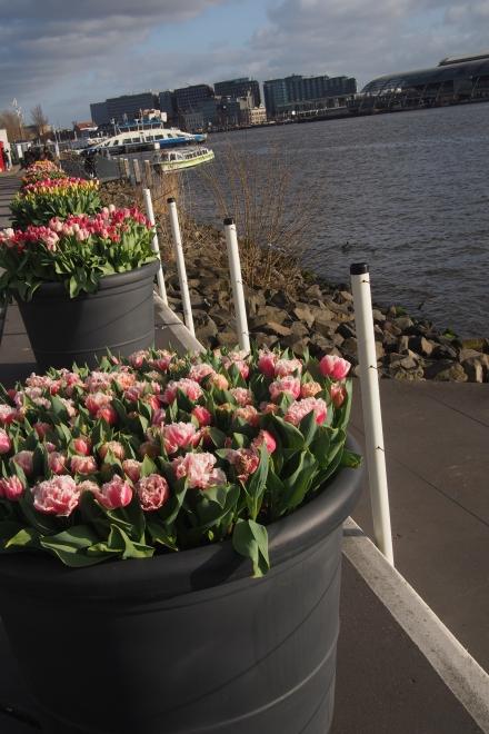 Flowers & ferry.